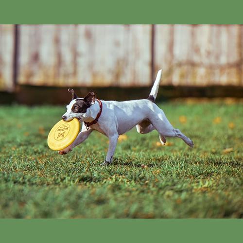 Gresham Animal Hospital_How_Dogs_Share_Their_Sense_Of_Humor_4