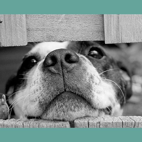 Gresham Animal Hospital_How_Dogs_Share_Their_Sense_Of_Humor_5