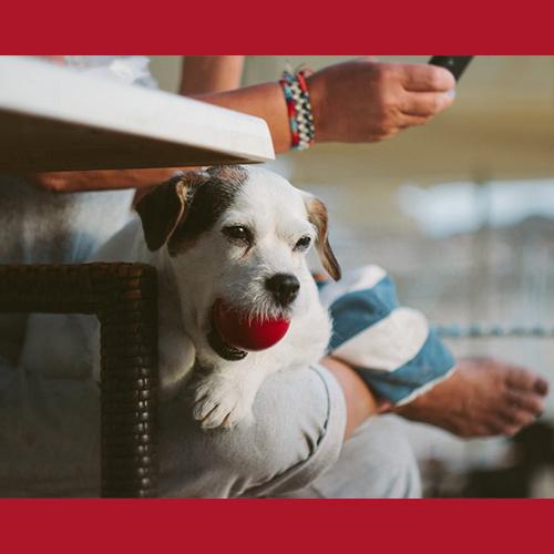 Gresham Animal Hospital_How_Dogs_Share_Their_Sense_Of_Humor_7