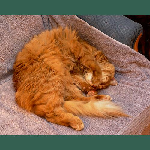 Gresham Animal Hospital_Pet_Friendly_Decorating_Tips_3