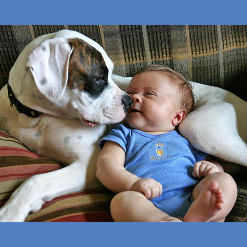 Gresham Animal Hospital_Safety_Tips_For_Getting_New_Dogs_When_You_Have_Kids_12