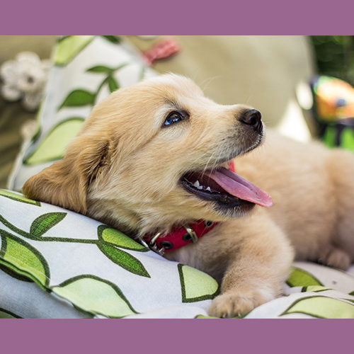 Gresham Animal Hospital_Safety_Tips_For_Getting_New_Dogs_When_You_Have_Kids_14