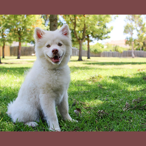 Gresham Animal Hospital_Safety_Tips_For_Getting_New_Dogs_When_You_Have_Kids_9