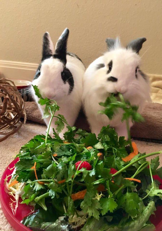 Rabbit7 (2)
