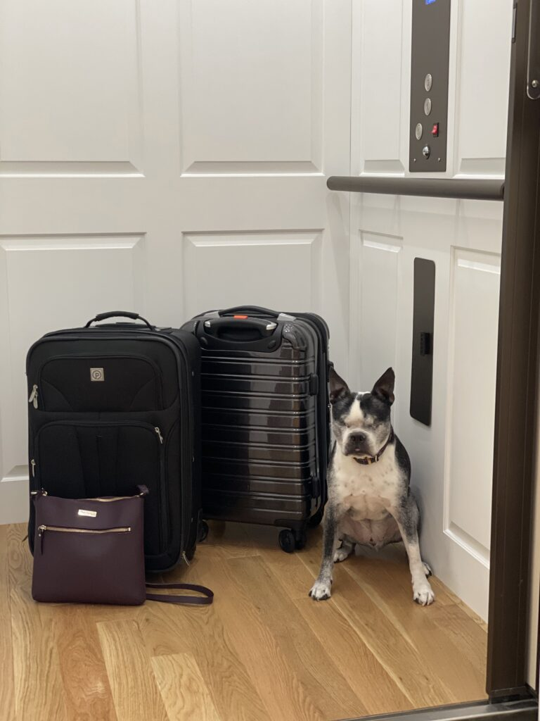 Home Elevator Boston Terrier w Luggage