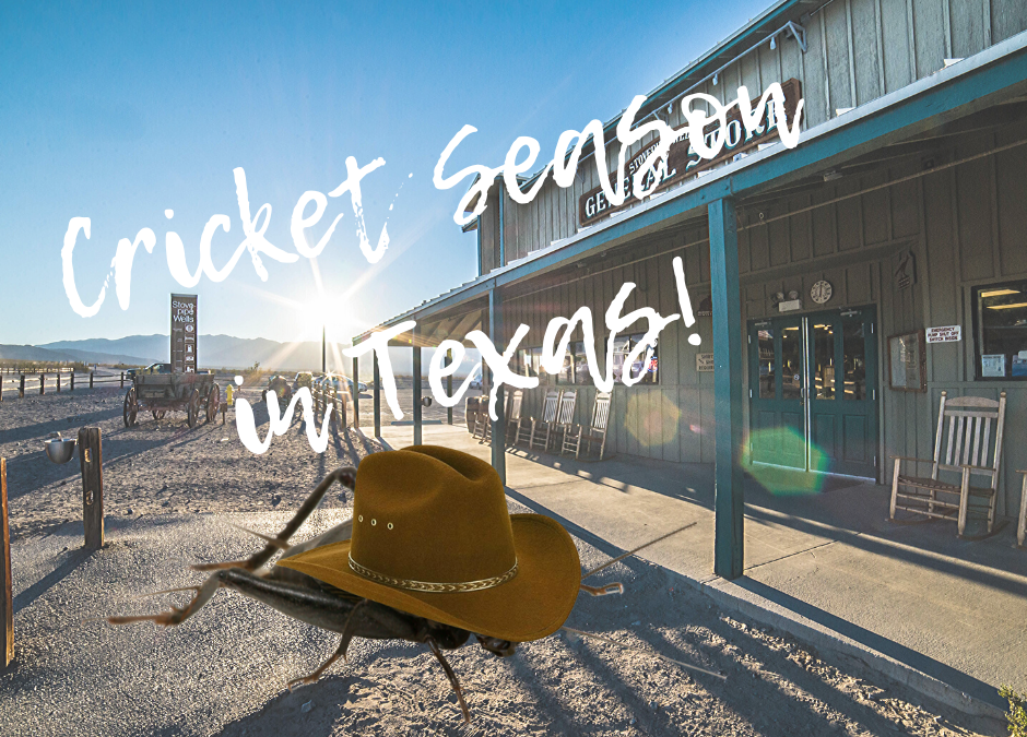 Crickets in Texas!