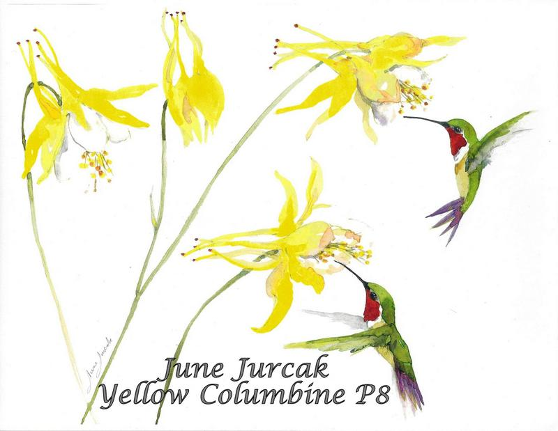 jj2016-18 yellow columbine and hummingbirds p8