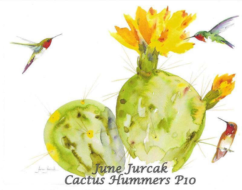 jj2016-19 cactus hummingbirds p10