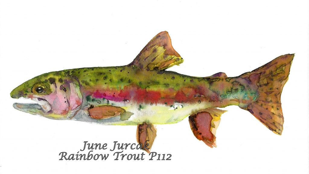 C112Rainbow Trout
