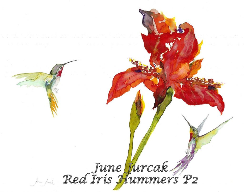 P2Red Iris Hummingbird (1)