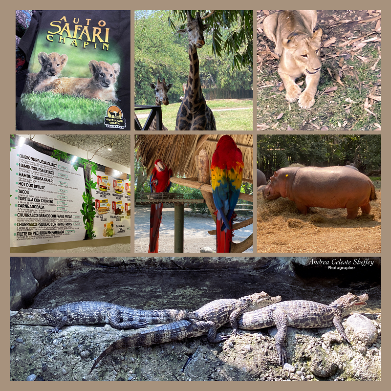 Visiting Auto Safari Chapin in Guatemala