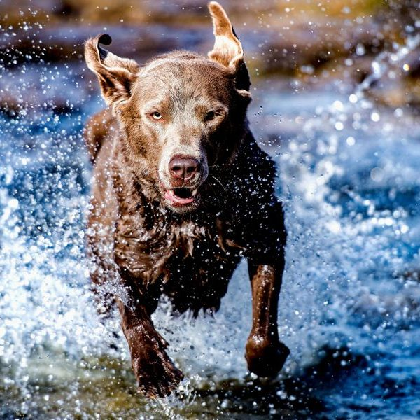 Dog-Animal