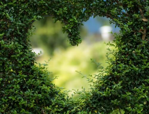 Healthy Heart Habits for Seniors