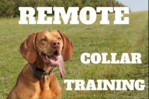 Remote Collar Training