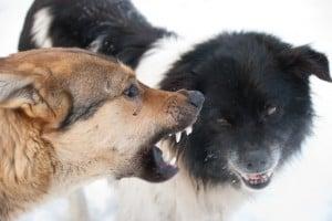 Dog Training Mesa AZ Dog Aggression