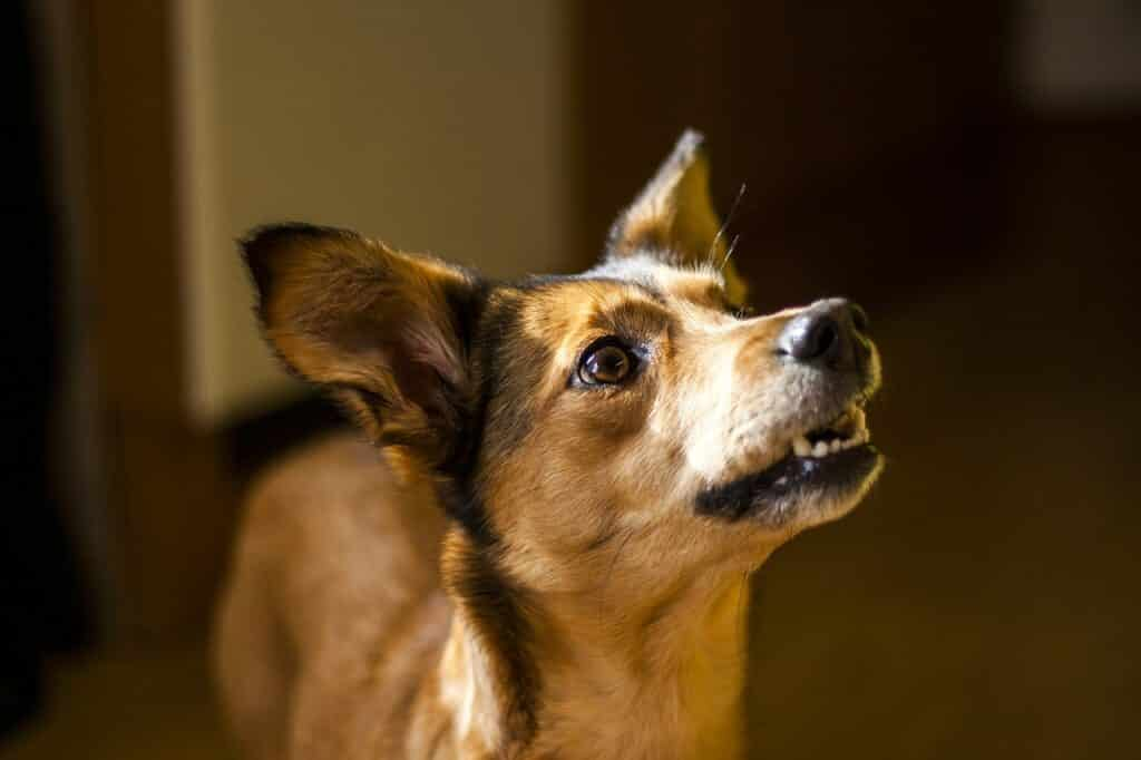 Dog Training Mesa AZ