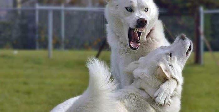 Dog Aggression Training Gilbert