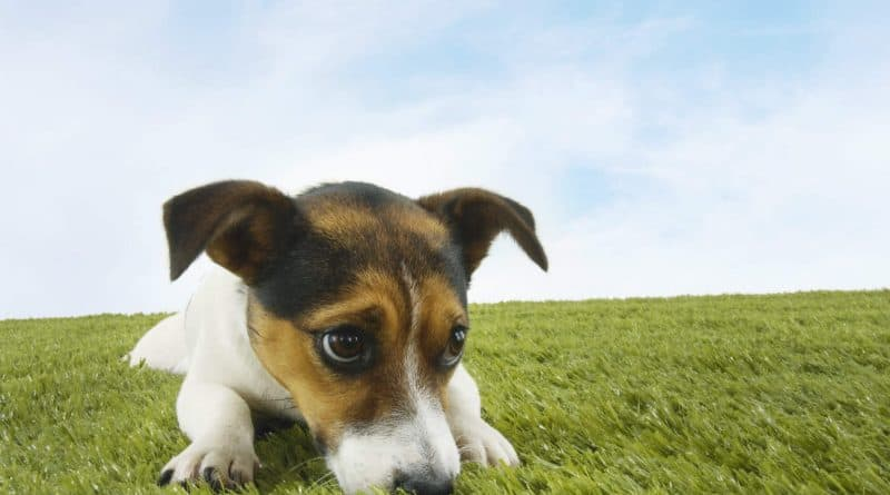 Dog Anxiety Training Gilbert