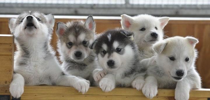 Gilbert Puppy Training
