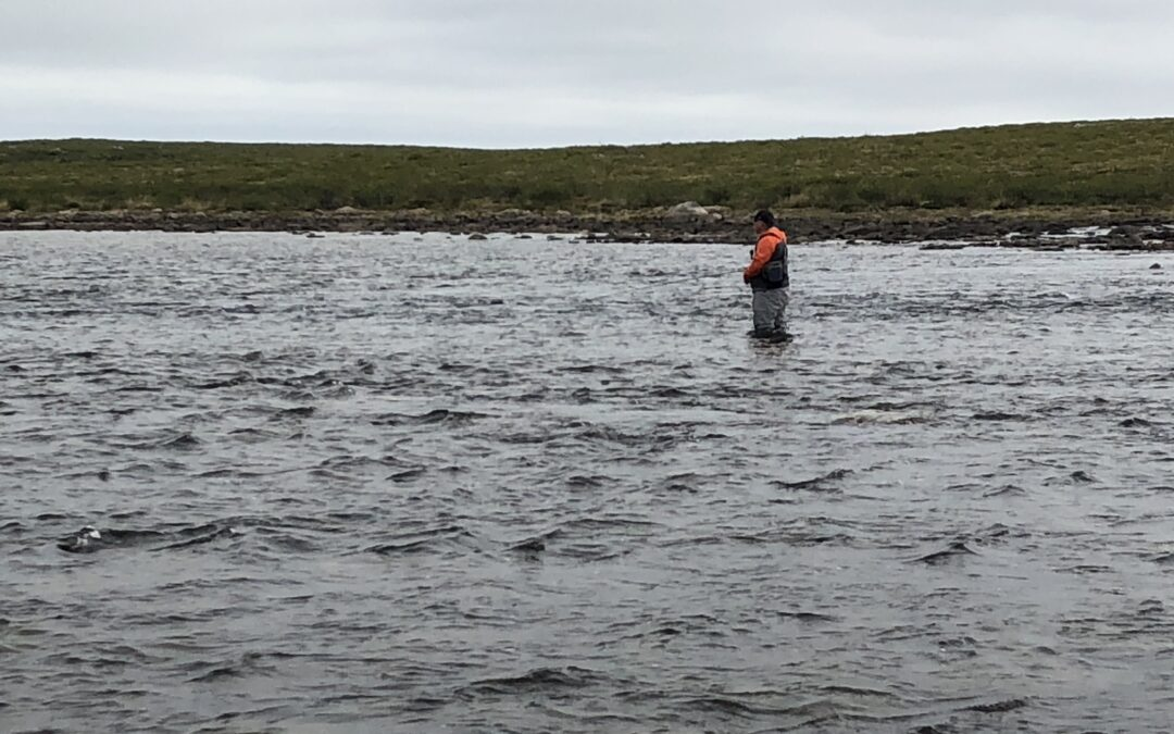 Stalking monster lakers in shallow water