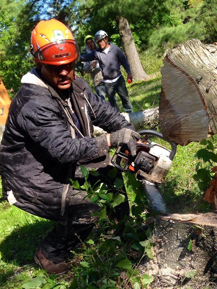 cutting-tree-stump-2