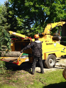 tree-removal1-small