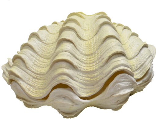"""Large Resin Clam 2 Piece White Finish 13""""W Large Sculpture"""