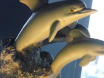 Dolphin Decor