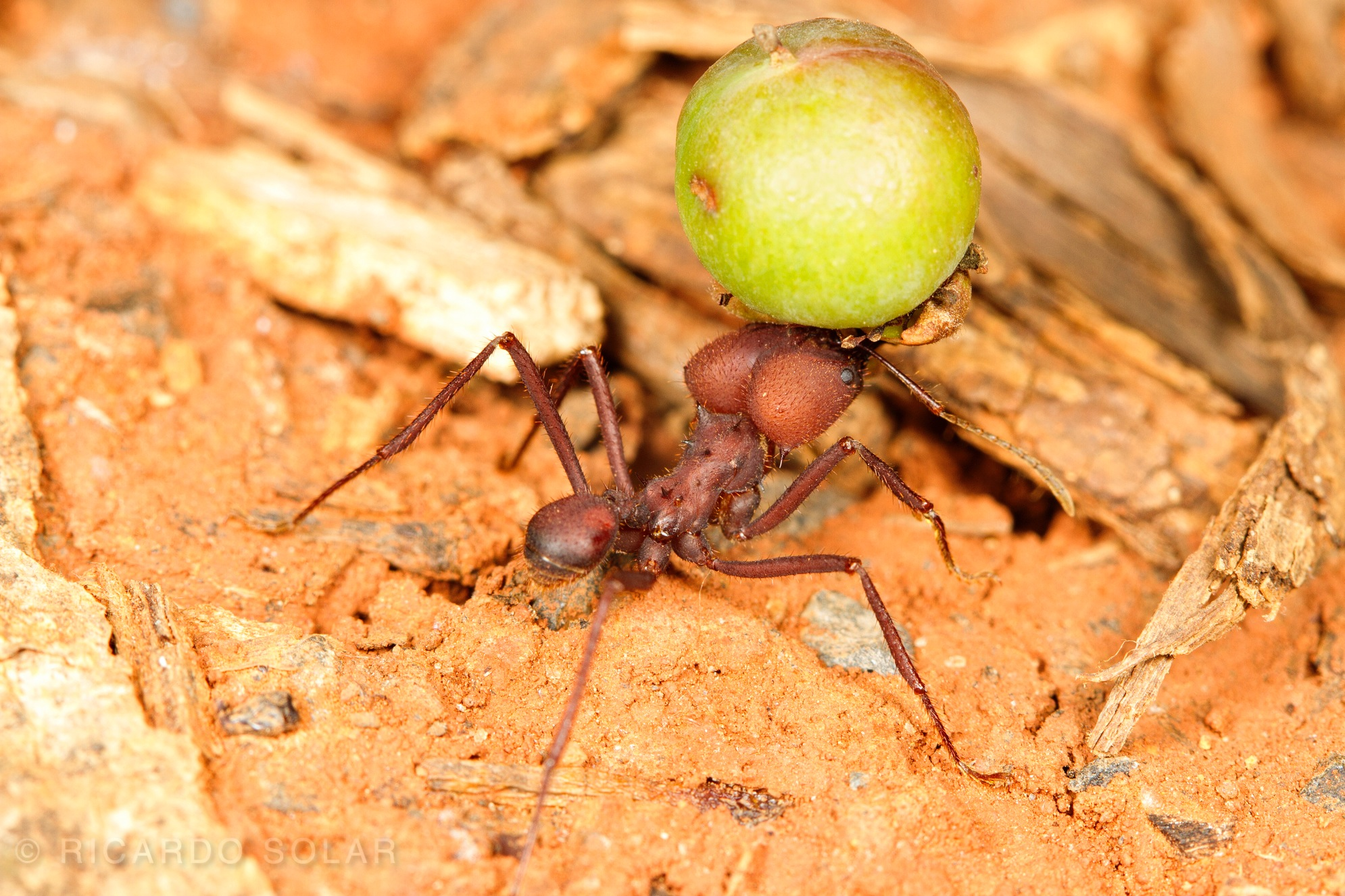 Ants love second-growth forests!