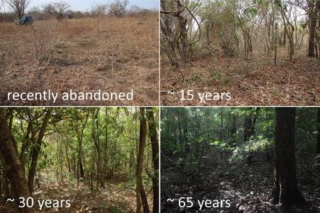 Can tropical forests recover after major disturbance?