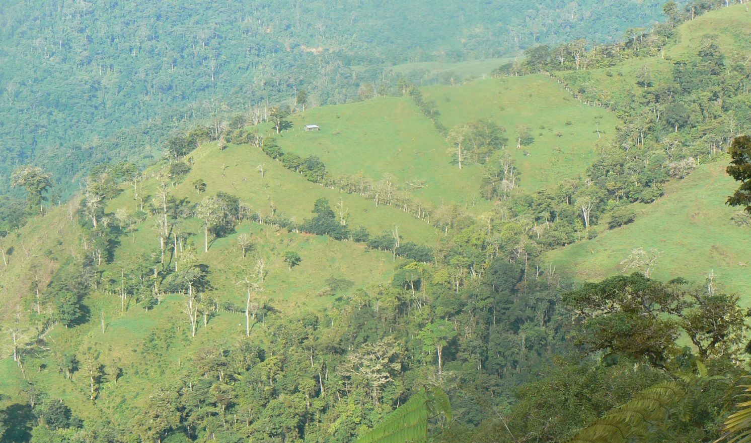 Tree islands for tropical forest restoration: the outlook is rosy after 10 years
