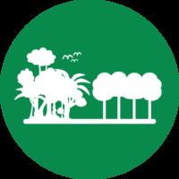 Tree Cover Change