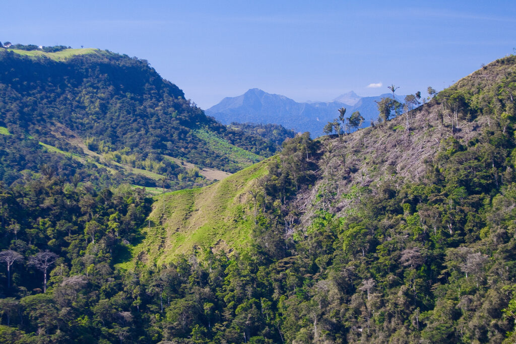 Clearing and natural regeneration in Andean forests, Intag, Ecuador (Photo: Jake Brennan)