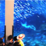 real life mermaid footage japan