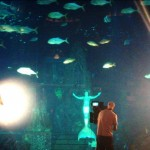 mermaid melissa real-life mermaid swimming in dubai atlantis the palm aquarium