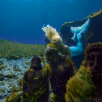 mermaid melissa professional diver silver springs florida