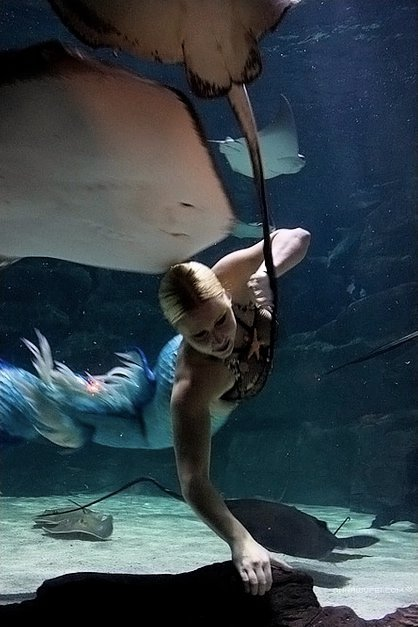 mermaid stingray show