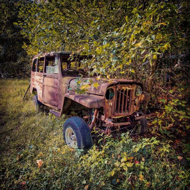 stock-photo-tree-car-broken-green-environment-wheel-old-vehicle-rust-d9ba153d-41ea-4d37-8583-7cae125dcf2d