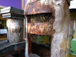 Tree trunk hive