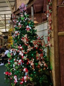 Christmas Tree in The Adventure Centure