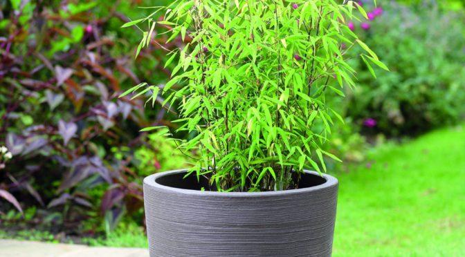 Win a Planter from Stewart Garden