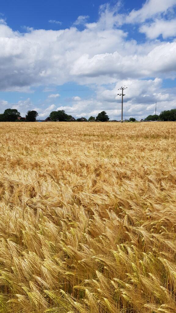 calm Walks in the field