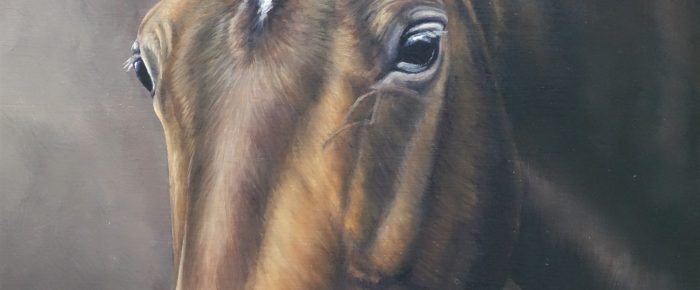 Latest Horse Portrait