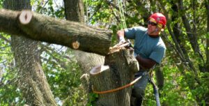 When Should a Tree be Removed?