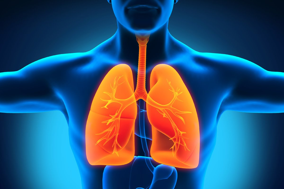Photo of 10 Foods That Improve Your Lungs