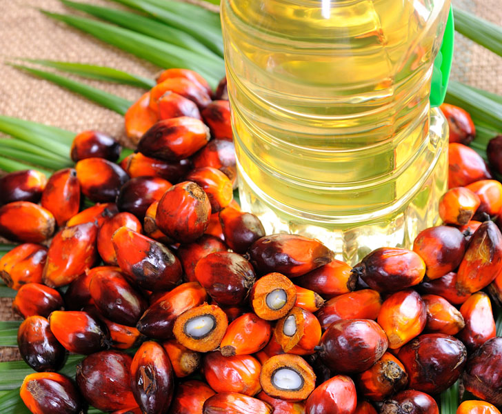 Photo of Health Benefits of Palm Oil