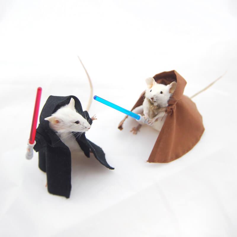 Jedi36-1.jpg?time=1585912479