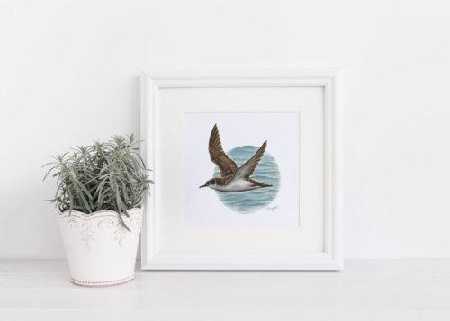 Manx Shearwater Painting Art Print