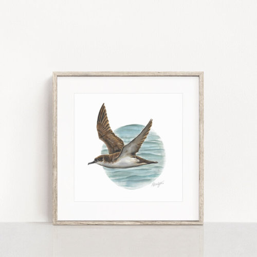 Manx-Shearwater-Bird Art Print-