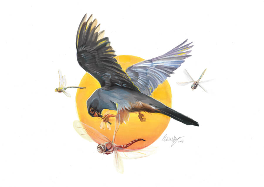 Red footed falcon painting